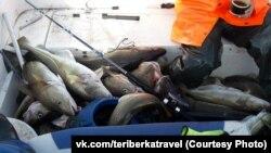Рыбалка в Териберке