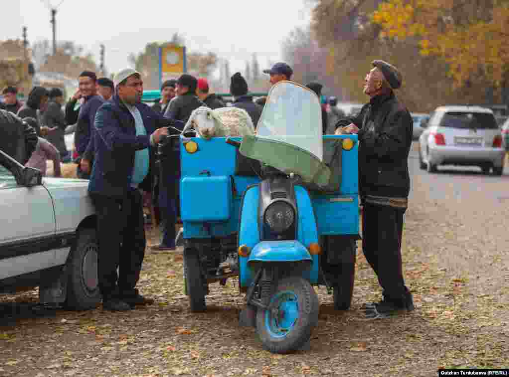 За 100 сомов вашего барашка или козу доставят на «мото такси»прямо к дому.