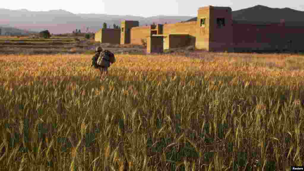 A U.S. paratrooper marches through a wheat field in Paktiya Province, Afghanistan, on July 12. (REUTERS/Lucas Jackson)