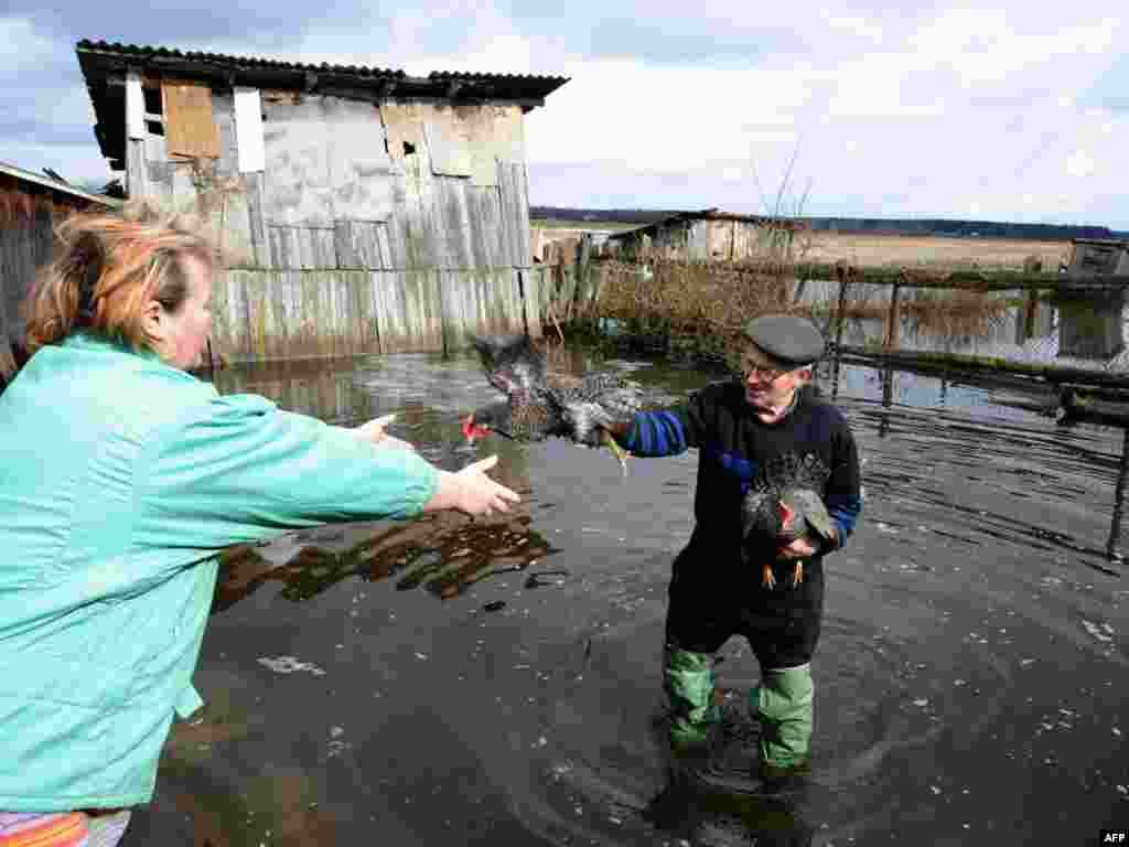 Беларускія фэрмэры спрабуюць выратаваць куранят з затопленых тэрыторыі ў пасёлку Ўзда