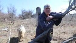 Водяне: Миколай Іванович та його кози