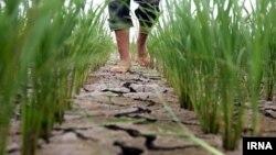 За оприлюдненими даними, посухою в Чехії охоплено загалом 63 відсотки території