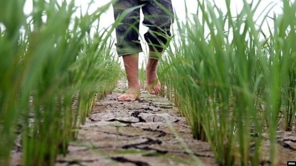 «کل استان» مازندران دچار خشکسالی است