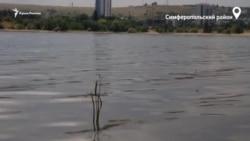 Симферопольское водохранилище. Крымский оазис во время засухи (видео)