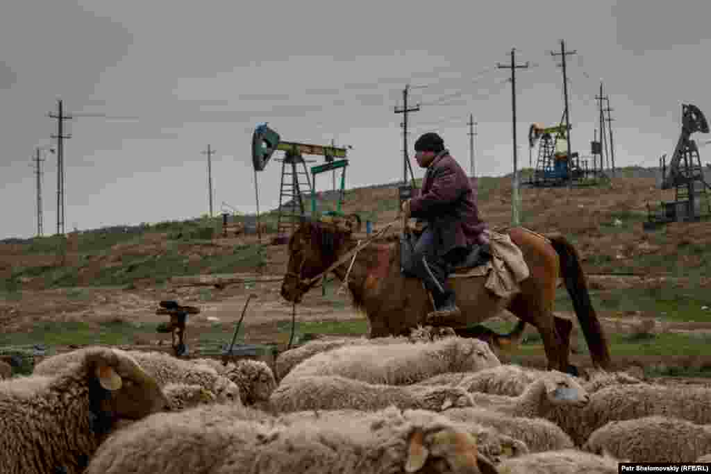 Ilshan at work. They are not his sheep -- he is paid $250 a month for looking after them.