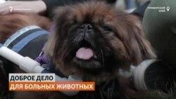 Школьница из Приморья бесплатно делает инвалидные коляски для собак