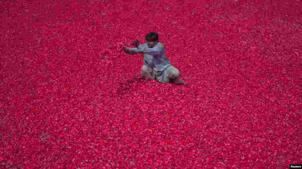 A Pakistani man spreads rose petals out to dry on the floor of a compound in Lahore on May 22. The petals will be used to make incense sticks. (Reuters/Mohsin Raza)