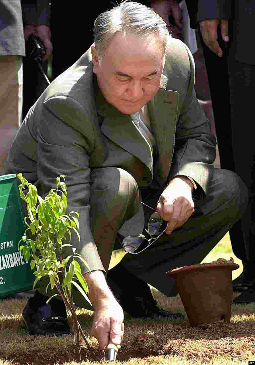 Во время поездки в Индию в 2009 году бессменный президент Казахстана Нурсултан Назарбаев в знак дружбы между странами высадил сандаловое дерево