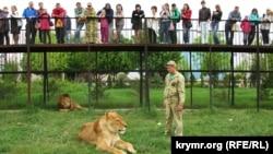 Крим, Білогірськ – тигролев Казимир і власник сафарі-парку «Тайган» Олег Зубков