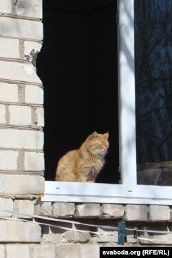 Луганскі кот як сымбаль мірнай будучыні (фота Сяргея Целіжэнкі)