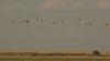 Калмыкия. Иллюстративное фото