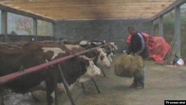 Farma obitelji Muharemagić iz Bratunca