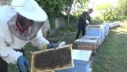 Pčele umiru oprašujući