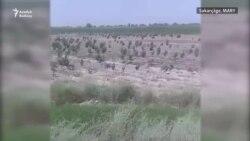 Sakarçägäniň seýrek gowaçaly ekin meýdanlary