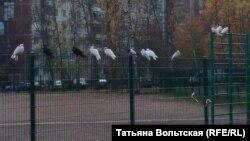 Голубятню разрушили, но птицы не улетают