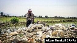 کشاورز ایرانی در شالیزاری نزدیک تهران، در حال جدا کردن آشغال از کشت در حال آبیاری