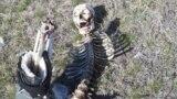 Человеческий скелет, найденный в Оренбургской области России.