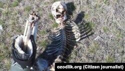 Оренбург областининг Россия-Қозоғистон чегарасига яқин Акбулак қишлоғидан топилган одам скелети.
