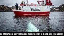 В океані покинутим або загубленим щороку є рибальське спорядження, що важить, як 50 тисяч двоповерхових автобусів