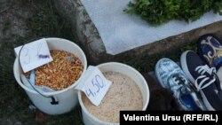 De vorbă cu oamenii din Leova despre independența Republicii Moldova