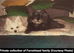 سفید و برفی، دو سگ فریدون فرخزاد