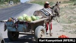 Сарыағаш-Шымкент күрежолы бойында жеміс пен көкөніс сатып тұрған әйел. 26 тамыз 2012 жыл.