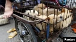 Собаки на продажу. Юлинь, КНР