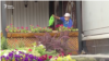 Kazakhstan - Man watering flowers. Nur-Sultan. Video grab.