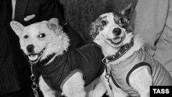 Собаки Стрелка и Белка, вернувшиеся на Землю. Фото Сергея Преображенского и Николая Ситникова, 22 августа 1960 года