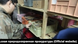 Незаконно выловленный омуль, архивное фото