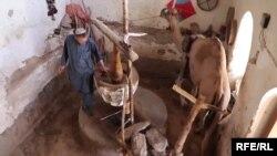 آرشیف، جهاز روغن کنجد در افغانستان