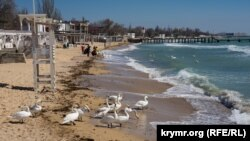 Лебеди на пляже в Евпатории, апрель 2021 года