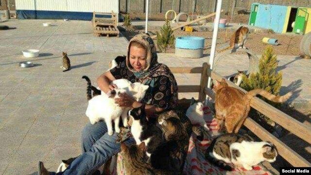 خانم رئوفی، بنیانگذار پناهگاه گربههای اشتهارد