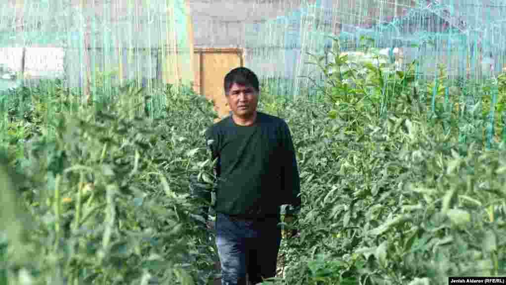 Помидор баккан Кадамжайдын тургуну Махмутали Темиров. Дыйкандын помидорлору май айында бышып баштап, базарларга сатыкка чыгат.