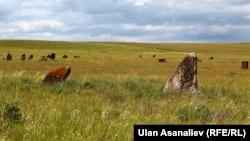 Алтайдагы кыргыз жоокерлерине коюлган таш эстеликтер.