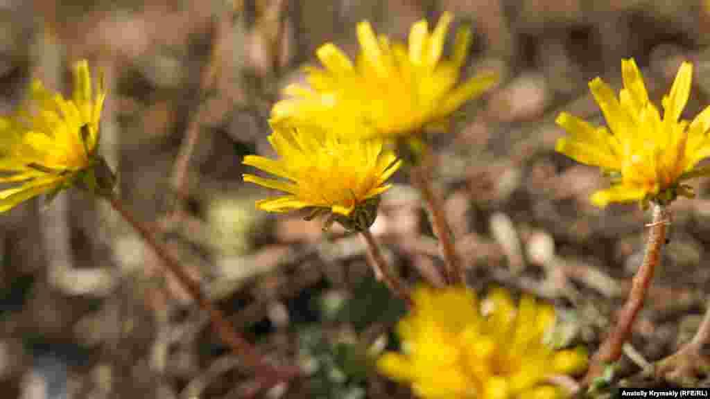 Распустились осенние цветы