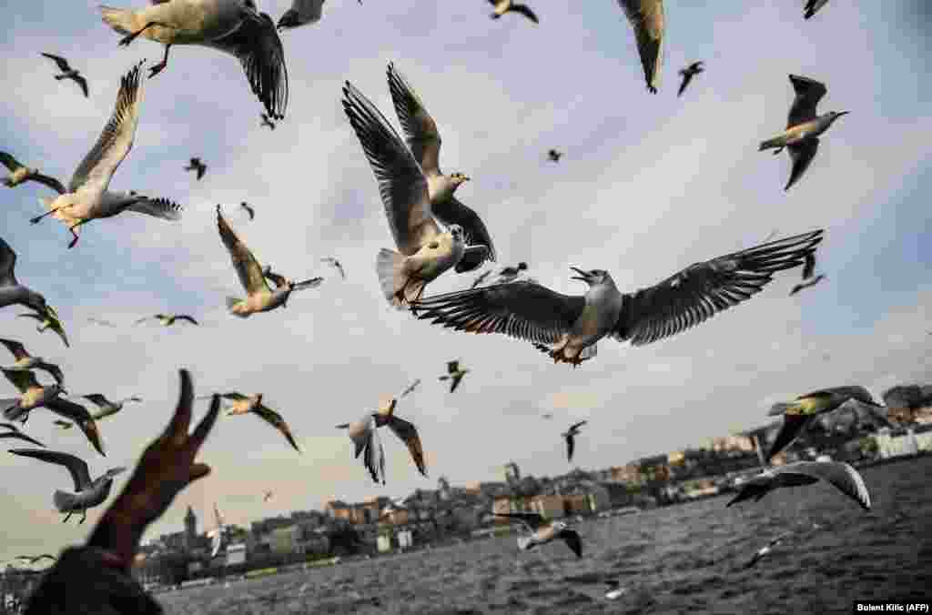 People feed seagulls flying behind a ferry on the Bosphorus as the sun shines in Istanbul. (AFP/Bulent Kilic)