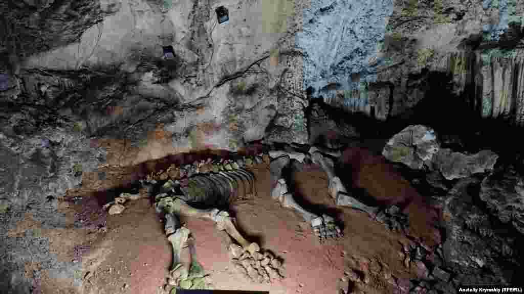 «Мамонтовое» название пещера получила благодаря этим останкам мамонтенка, которые здесь обнаружили палеонтологи