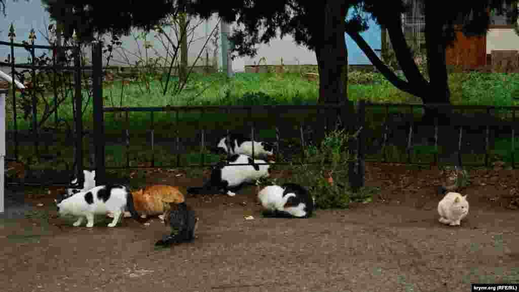 В алуштинських котів на набережній своя трапеза