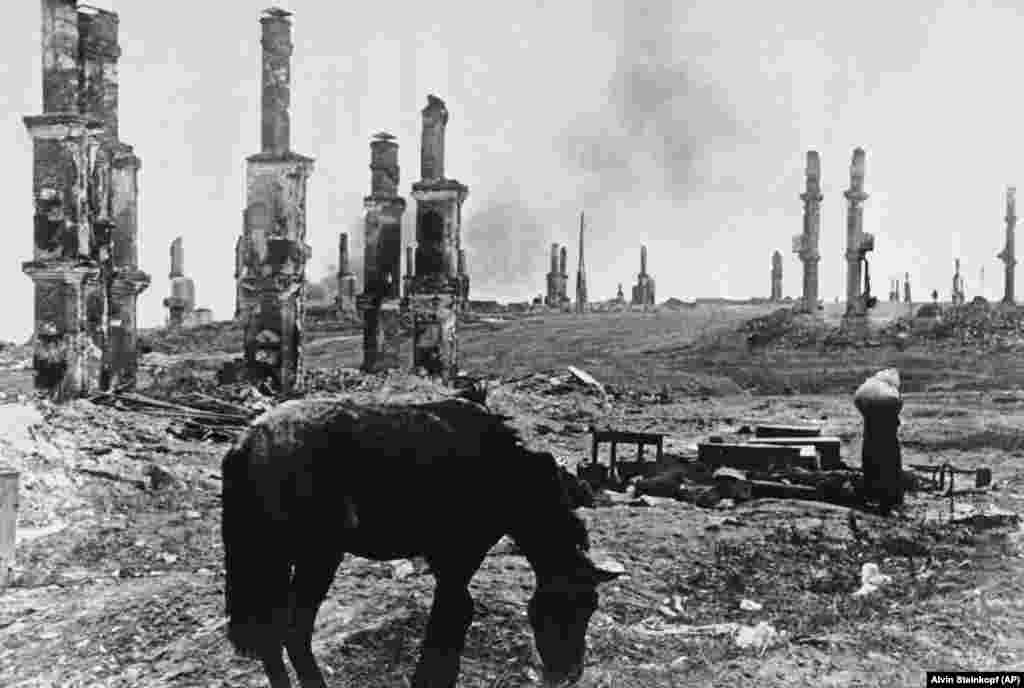 An abandoned horse grazes among the ruins of Stalingrad on December 18, 1942. In the background, at right, Russian women leaving their battered homesteads make their way through the ruins. (AP/Alvin Steinkopf)