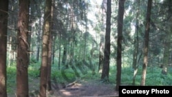 Цаговский лес в Жуковском