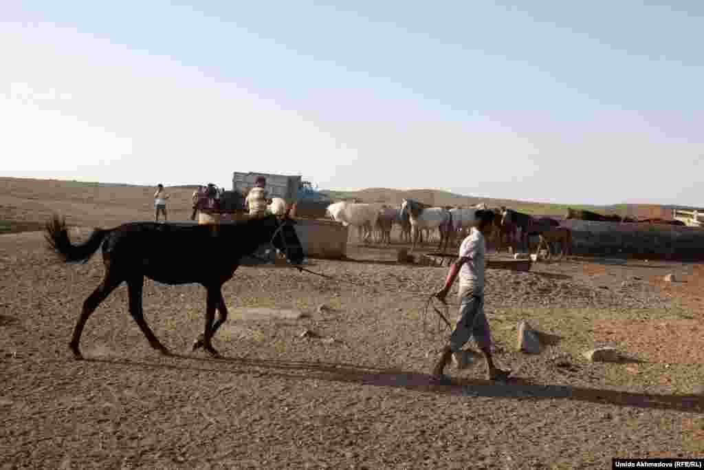 Тамды ауданындағы фермалардың бірінде.