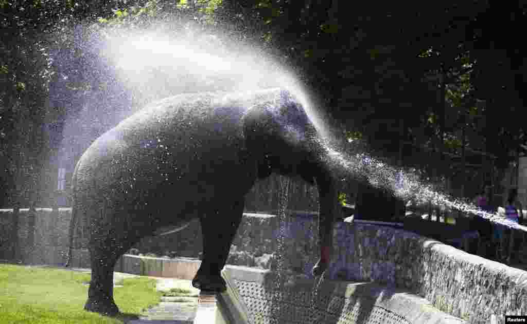 A zookeeper sprays water onto an Asian elephant to help it cool down on a hot day at Belgrade. Temperatures in Serbia have risen to up to 40 degrees Celsius. (Reuters/Marko Djurica)