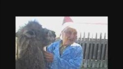 Бабушка и верблюд
