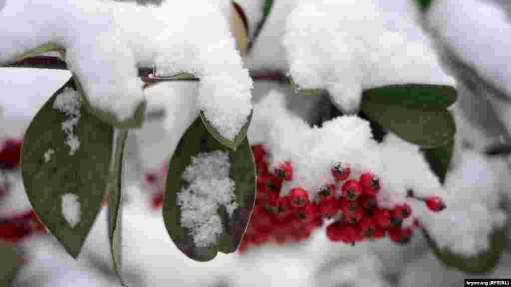 Снегопад в Симферополе