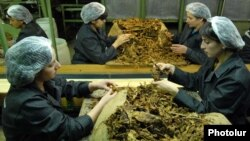 Armenia -- Workers at a tobacco fermentation factory in Masis.