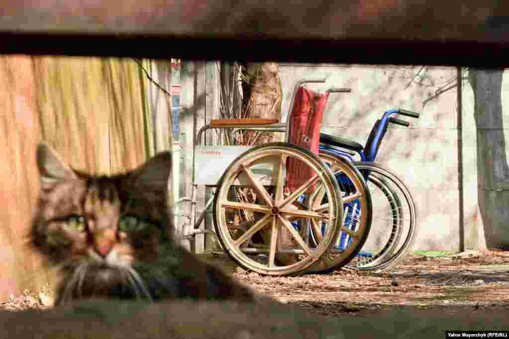 "FINALIST: ""Leave Me Alone in My Hospital"": A stray cat living in a former hospital in the center of Minsk peers into the lens of the photographer. (Yahor Mayorchyk, Minsk bureau of RFE/RL's Belarus Service)"