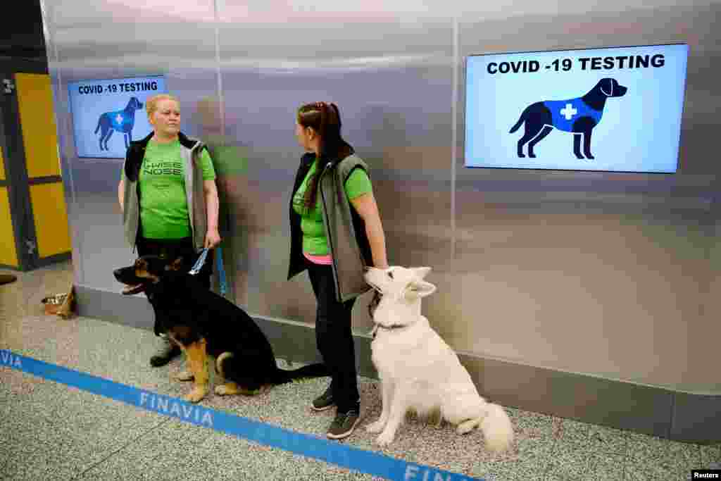 Кучињата трагачи Вало (лево) и Е.Т. (десно), кои се обучени да детектираат ковид-19 од примероците на пристигнатите патници, седат покрај нивните тренери на аеродромот во Хелсинки, Финска, 22 септември 2020 година.