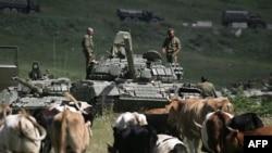 Российский танк возле стада коров. Южная Осетия, 9 августа 2008 года.