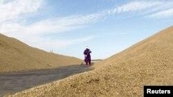 Бракує вагонів-зерновозів, ще й дозвільні центри працюють погано – президент зернової асоціації